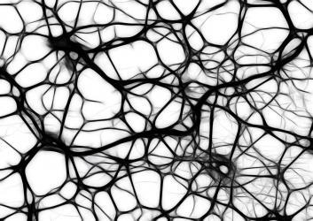 Les femmes et les hommes ont-ils le même cerveau ?