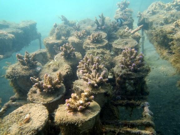 L'UMONS se lance dans la culture équitable de coraux à Madagascar